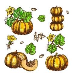 Hand drawn set sketch pumpkin leaves vector