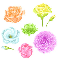 set decorative delicate flowers objects vector image