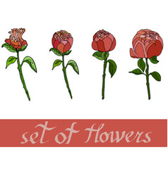 set of flowers from peones vector image