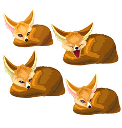 set of lying sand foxes and one yawns vector image