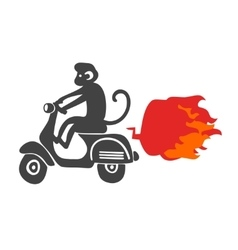 Monkey on the scooter vector image