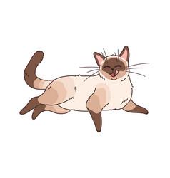 Funny cartoon cat adorable home animals brown vector
