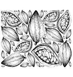 Hand drawn background of theobroma cacao fruits vector