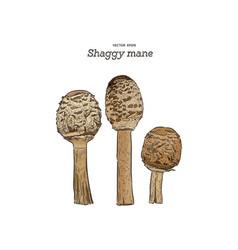 shaggy mane mushroom hand draw sketch vector image