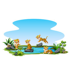 tigers playing in pond vector image