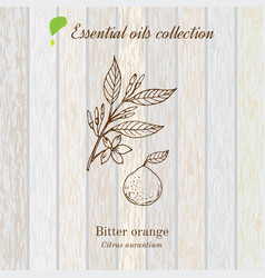 Bitter orange essential oil label aromatic plant vector