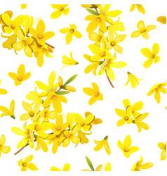 golden bell seamless pattern forsythia suspensa vector image