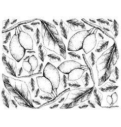 Hand drawn background of fresh curriola fruits vector