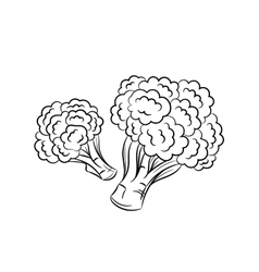 Hand drawn broccoli sketches on white background vector image