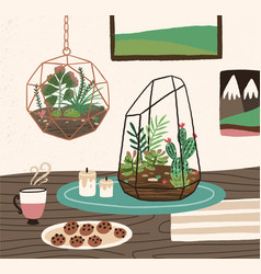 interior cozy room with succulents cactuses vector image