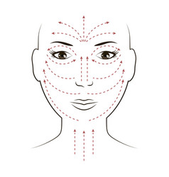 facial massage lines for applying cream on face vector image vector image
