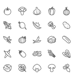 Set of Outline stroke Vegetable icon vector image vector image