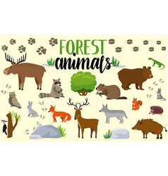 Forest animals woodland cute animal set drawing vector