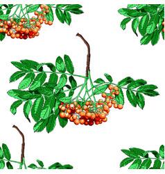 hand drawn rowan tree seamless pattern isolated on vector image
