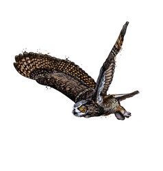 long-eared owl eagle owl from a splash vector image