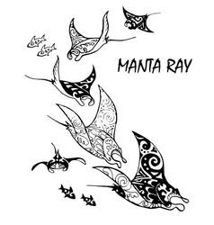 Manta ray vector