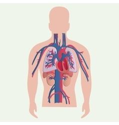 Medical human organs vector