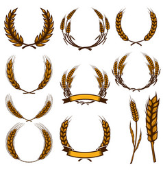 set of wheat spikelet isolated on white vector image