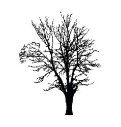 Realistic tree silhouette isolated on white vector