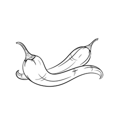 Hand drawn chilli sketches on white background vector image