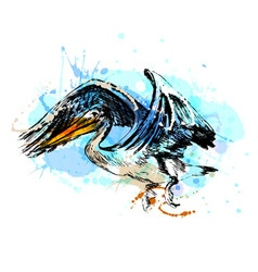 colored hand sketch a flying pelican vector image