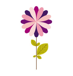 Colorful silhouette with echinacea purpurea flower vector