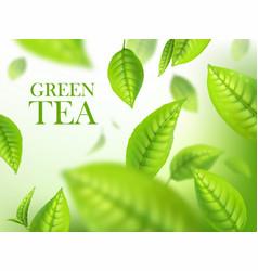 Green tea leaves organic herbal background ads vector