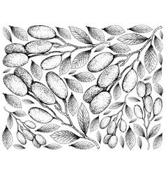 Hand drawn background of elaeocarpus hygrophilus f vector