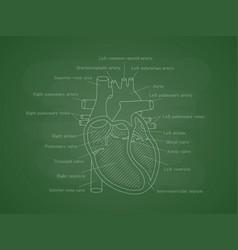 Human cardiac system with descriptions vector