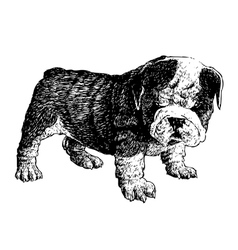 Puppy bulldogs 06 vector image