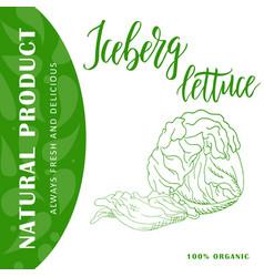 Vegetable food banner iceberg lettuce sketch vector