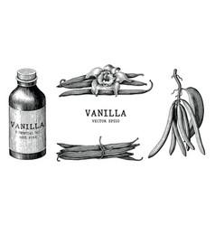 vanilla collection hand draw vintage clip art vector image