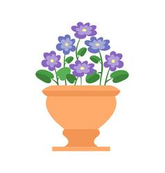chionodoxa pot with flowers vector image
