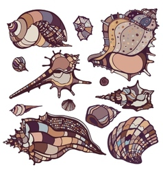 Sea shells set vector image
