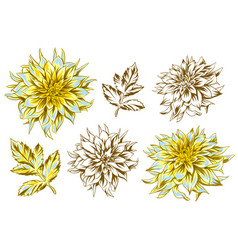 Set of fluffy yellow dahlias and leaves vector