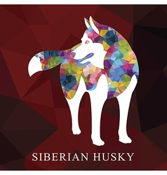 Siberian husky polygon vector
