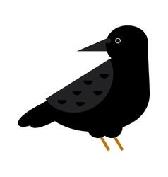 Black crow raven bird vector image