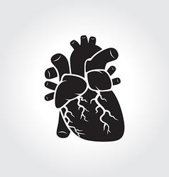 Heart anatomy symbol vector image vector image