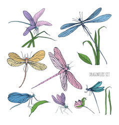 collection beautiful colorful dragonflies vector image