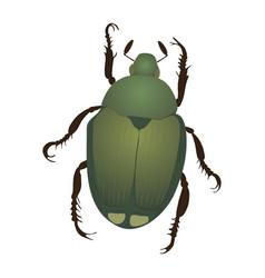 Japanese beetle vector