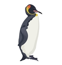 king penguin bird detalised on white background vector image