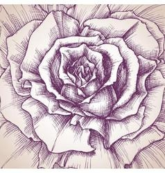Rose close-up drawing a design for wedding vector image