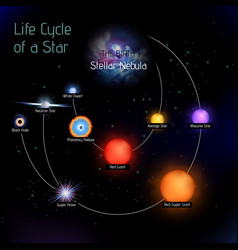 Sun life cycle in round shape vector