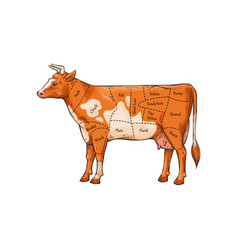 cut meat poster with cow sketch vector image