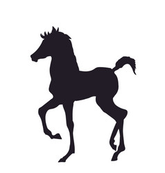 horse standing silhouette vector image