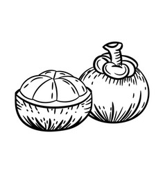 line drawing of mangosteen -simple line vector image