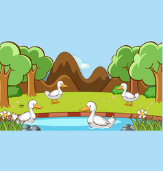 scene with ducks in forest vector image