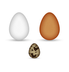 set brown and white chicken eggs and quail egg vector image