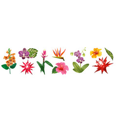Tropical watercolor flowers collection floral set vector