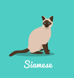 siamese cat on sky blue background vector image vector image